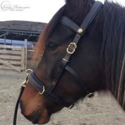 Kundenfoto: ELEVAGE Longierkappzaum mit Messing Cortesia Schnallen und optionalem gepolsterten Stirnband