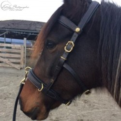 clients foto: Lunging cavesson ELEVAGE in black with brass Cortesia buckles and optional padded browband.