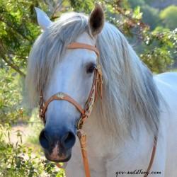 Option: Cortesia crown on noseband and browband